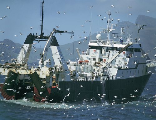 The UK Fish Industry Post-Brexit